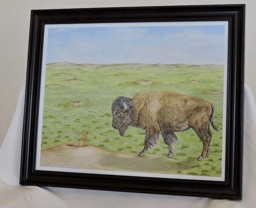 Bison prairie dog drawing
