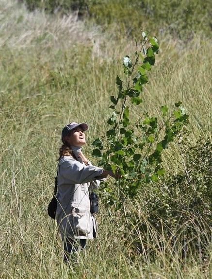 Nicole checks on past cottonwood plantings